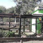 Denuncian la ECAS del Parque Pereyra de abandono de animales; Desarrollo Agrario bonaerense lo niega y acusa una campaña contra la institución